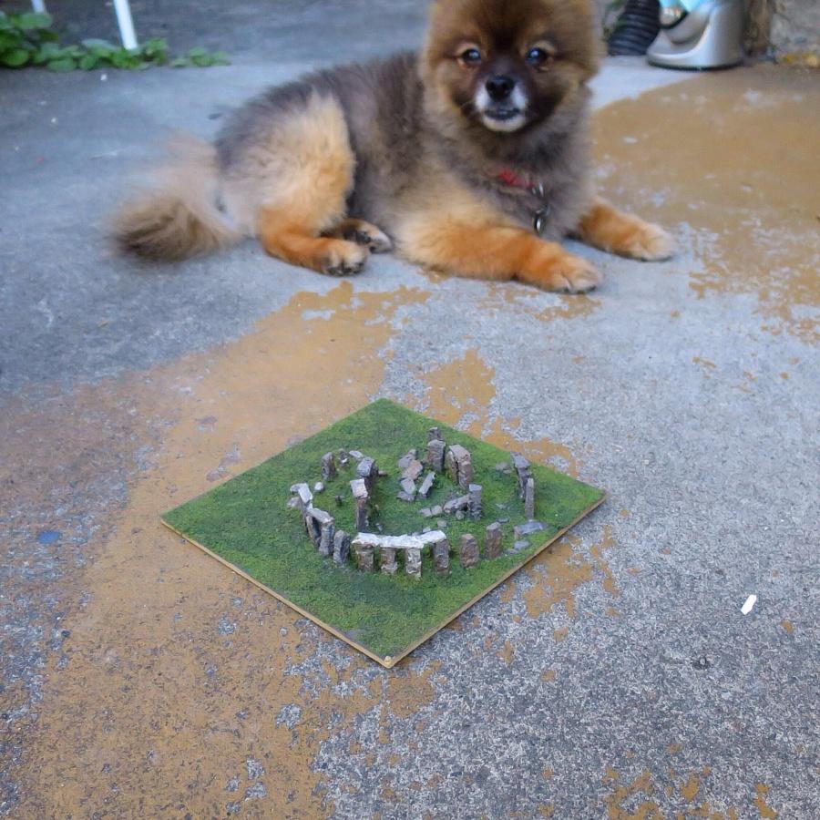 Stonehenge Puppy